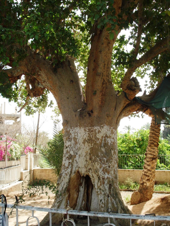 Israel 082.jpg