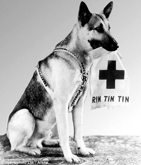 Oscar, Rin Tin Tin – the dog, a Oscar Winner / Rin Tin Tin o cachorro, vencedor do Oscar